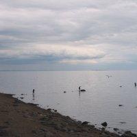 На Заливе :: Ирина