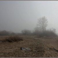 На Финском заливе-туман :: Андрей Зайцев