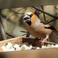 радостный :: linnud