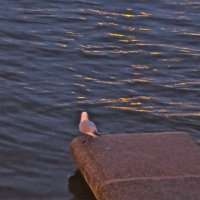 чайка в розовом :: Елена