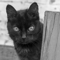 Пожилая кошка - Багира :: Ksenia Sun