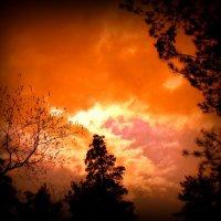 На закате. :: Мила Бовкун