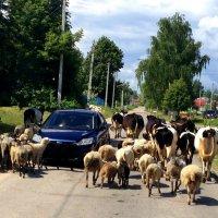 В деревне тоже бывают пробки. :: Валерий Гудков