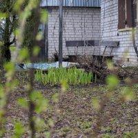 У меня в саду :: Марина Ломина