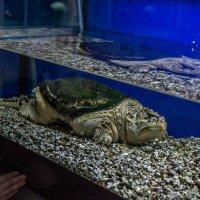 Из морских она животных,  то ли рыба, то ли нет :: Ирина Данилова