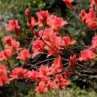 Нагоя ботанический сад :: Swetlana V
