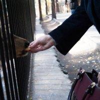 Животных не кормить :: Алеся Басаргина