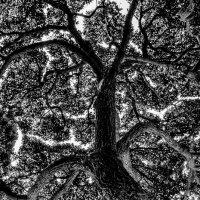 Дерево :: Максим Камышлов