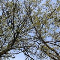 деревья :: Яна Савина
