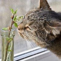 Запах весны :: Татьяна Петранова