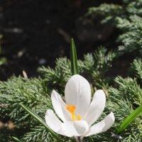 Весна :: Анна Городничева