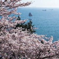 Южная Корея. Пусан. :: Ольга Нестеренко