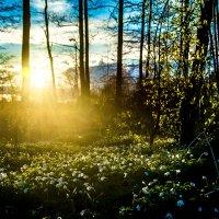 закат,цветы :: Александр Байков