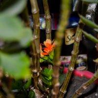 Там вдали цветок :: Света Кондрашова