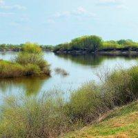 Реки ожили берега... :: Лесо-Вед (Баранов)