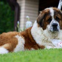 Собака - лучший друг человека. :: Анастасия Ненахова