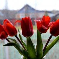 Первые тюльпаны :: Ольга