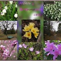 Весна в Ботаническом саду. :: ТАТЬЯНА (tatik)