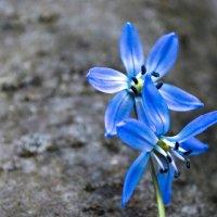 У нас тоже весна! :: Юрий