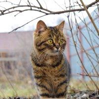 под деревом кошка :: Света Кондрашова
