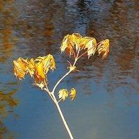 Весенний ветерок колышет листья :: Маргарита Батырева