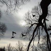 Деревья и птицы :: Татьяна Патракова