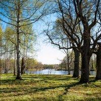 В парке весна 3 :: Виталий