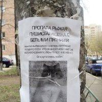Печальная история. :: Ольга Кривых