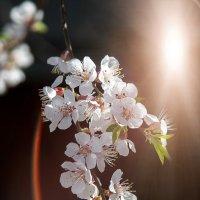Она (весна) пришла! :: Viktor Rusakov - project Русаков