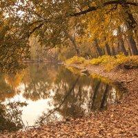 Осень :: S. Basov