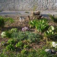 Весна :: Mary Коллар