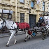 Питерская экзотика :: Valeriy Piterskiy