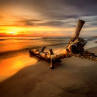 Beast from the Sea :: Ruslan Bolgov