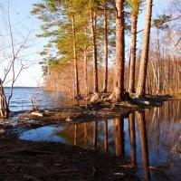 Весенний паводок :: Светлана Игнатьева