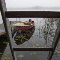 светофор в тумане :: liudmila drake