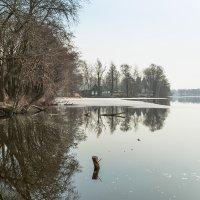 Разлив весенний :: Виталий