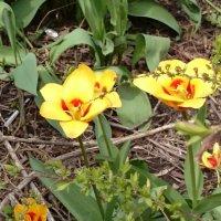 Весна идёт! :: Galina194701