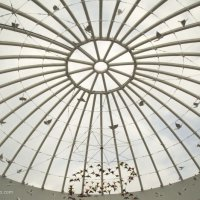 крыша :: Надежда Кузнецова