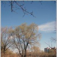 Весна на окраине :: muh5257