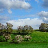 Весна :: Elena Wymann