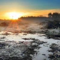 Рассвет поверженного леса...3 :: Андрей Войцехов