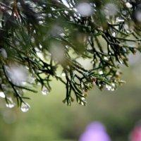 майский дождь в городе :: elena manas
