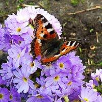 весна.... :: александр дмитриев