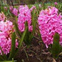 Цветы апреля... :: Николай Дони