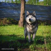 собака-подозревака :: Юрий Короновский