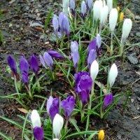 Первые цветы в парке Ботанического сада. :: Светлана Калмыкова