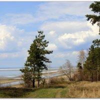 Весенний пейзаж. :: Мила Бовкун