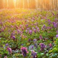 Весенний лес на закате. :: Valentina Severinova