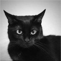 Кошка :: Юрий Рекеть