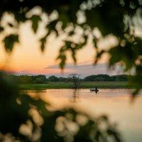 Рыбак :: Ольга Давыдова